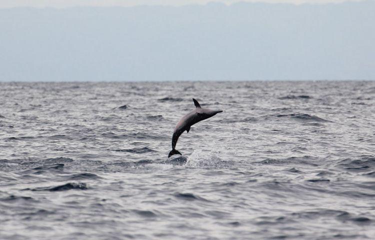 【香港出发】菲律宾宿务+薄荷岛6天5晚自由行-海豚