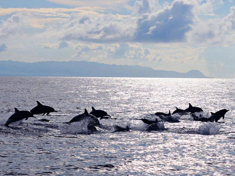 【香港出发】菲律宾宿务+薄荷岛6天5晚自由行-海豚哆